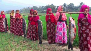 40 KG 4 Mahseer/Mohashol Fish Cutting & Cooking By Village Ladies – Big Carp Fish Recipe Cooking