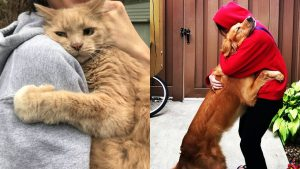Sometime All you need is a Hug –  PETS Most Emotional Moments showing love to Owner Ever