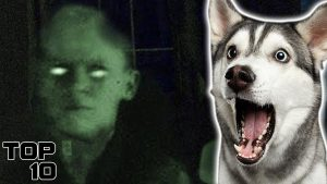 Top 10 Scary Pets That Sensed The Paranormal