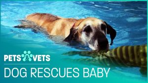Saviour Dog Rescues Drowning Baby | Pet Heroes | Pets & Vets