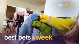 Group Hug | Best Pets of the Week
