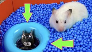 Cartoon Cat Maze vs cute Hamster pets – mister hamster Maze #hamsterstories #mazediytraps
