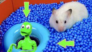 DAME TU COSITA vs cute Hamster Pets #misterhamster #hamsterstories